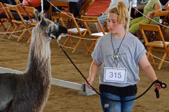Llama walking sideways
