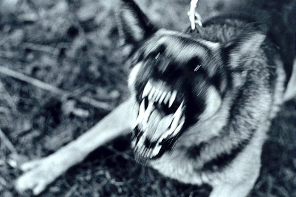 fear biter