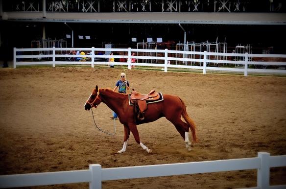Exercising a horse