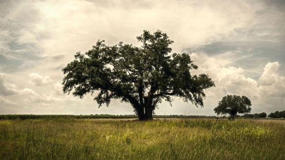 true detective tree