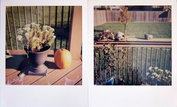 First two shots with the Polaroid 660.