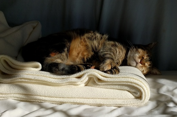 The cat still finds pleasure napping in the sun. So can you.